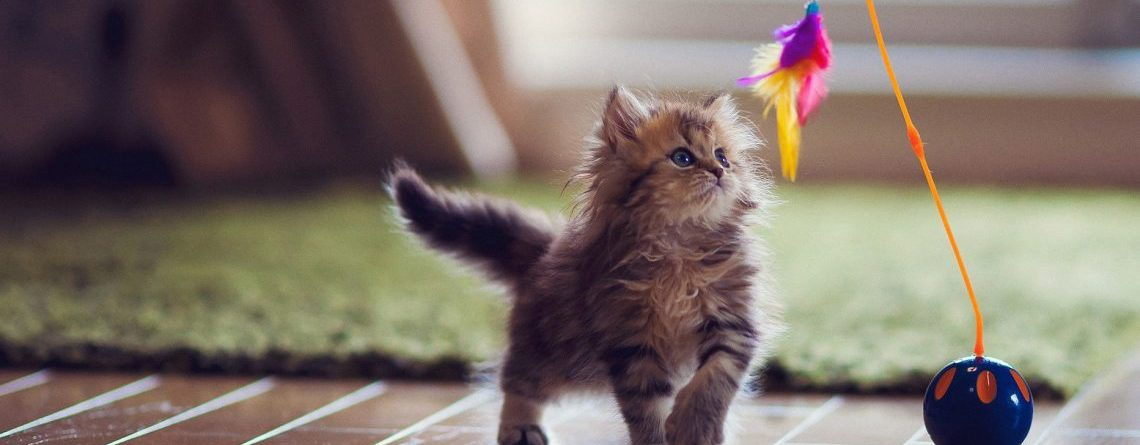 Best Cat Toys The Complete Guide Waggle Mail