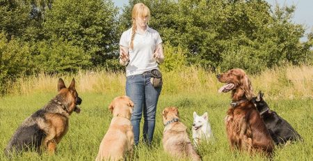 How To Train Your Dog Basic Commands Waggle Mail | Dog Training 101