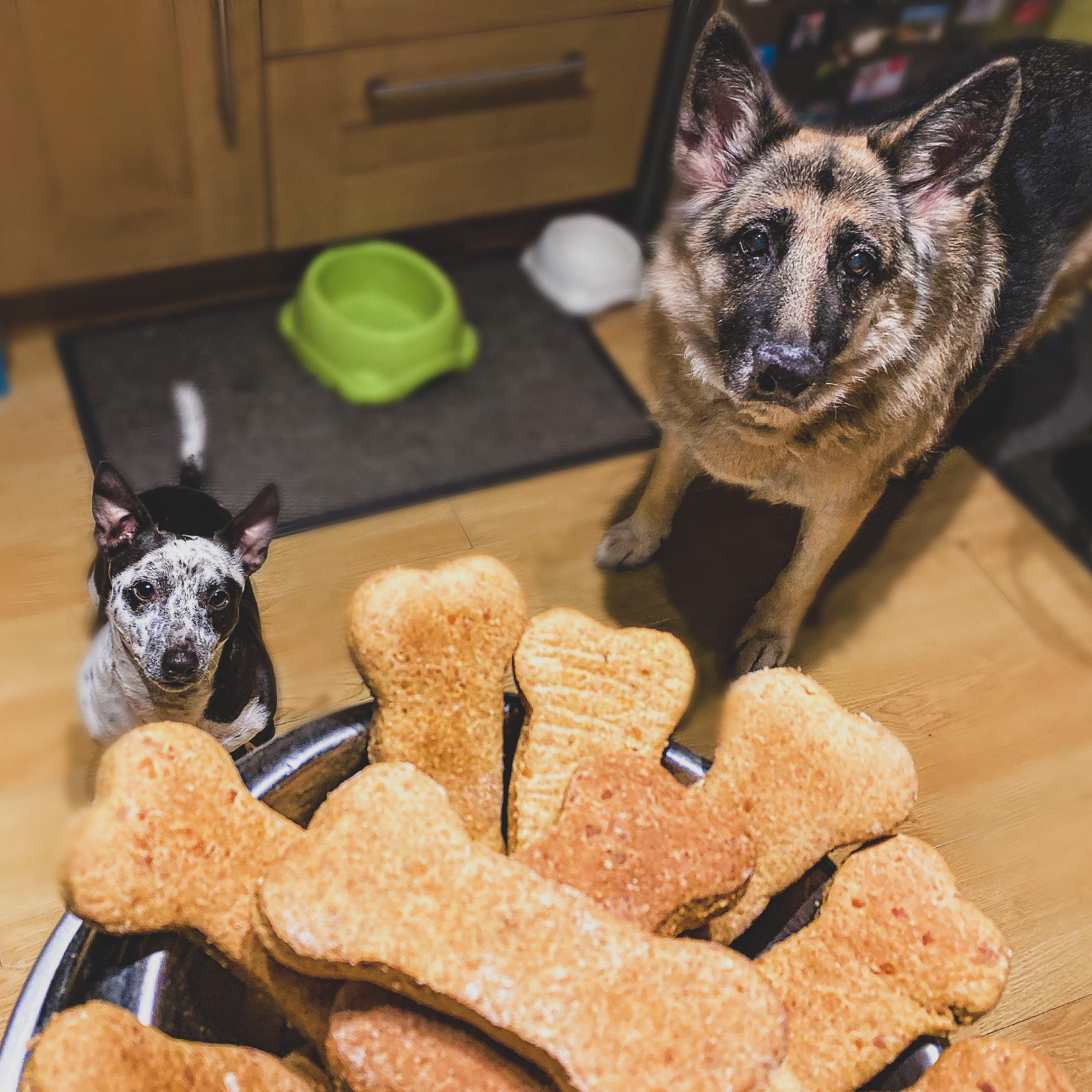 Waggle Mail - Homemade Dog Treats - Meg and Bruno