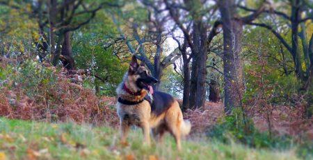 waggle mail dog subscription dog walking image