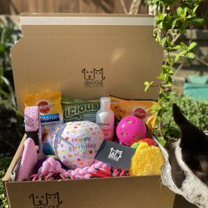 Dog Birthday Box Waggle Mail Dog Birthday Gift