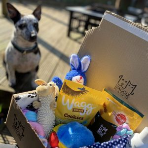 Dog with Puppy Gift Box