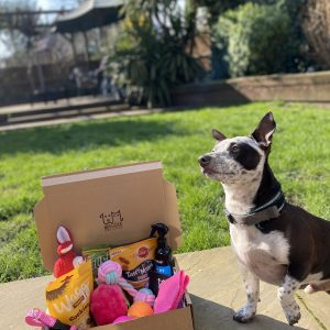 Dog with Monthly Puppy Subscription Box Waggle Mail