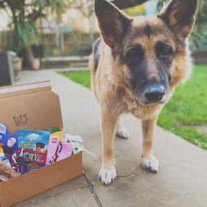 Waggle Mail Dog Birthday Box