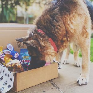 Waggle Mail Dog Subscription Box - Dog Sniffing Treats