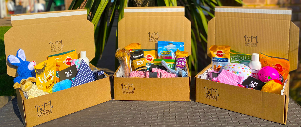 Cheap Dog Subscription Box Quality Waggle Mail
