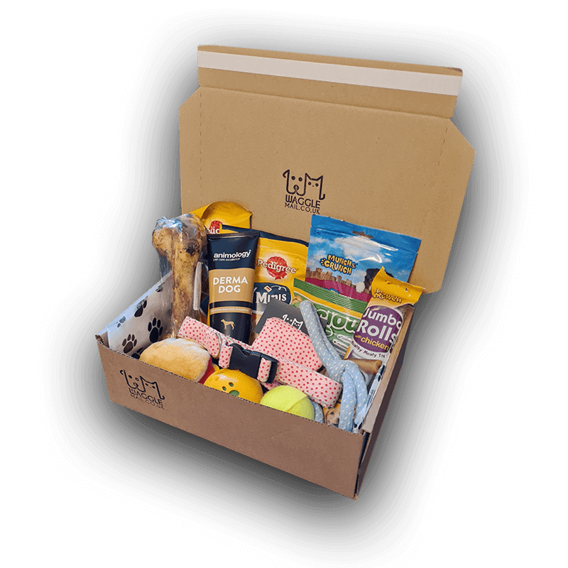Large Dog Subscription Box Waggle Mail