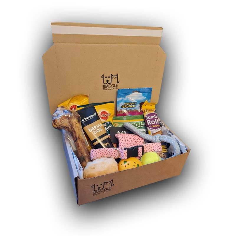 Large Dog Subscription Box Waggle Mail doggy treat box